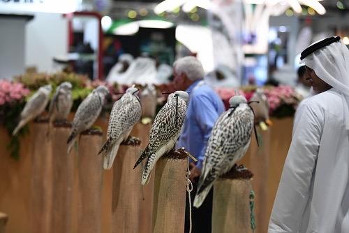 للمرّة الأولى في تاريخ الحدث تحويل معرض أبوظبي الدولي للصيد والفروسية إلى مهرجان شامل يمتد لـِ 7 أيام